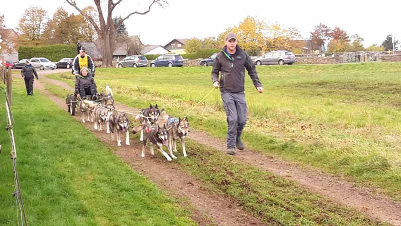 schlittenhunderennen-bermuthshain-30-10-2016_drk-grebenhain-6