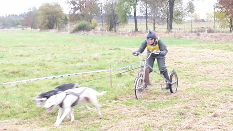 schlittenhunderennen-bermuthshain-30-10-2016_drk-grebenhain-8