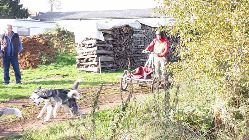 schlittenhunderennen-bermuthshain-30-10-2016_drk-grebenhain-9